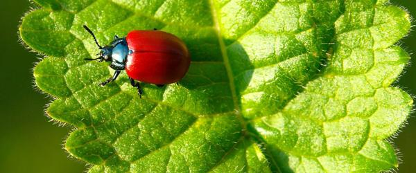 photojojo-macro-lens-ladybug