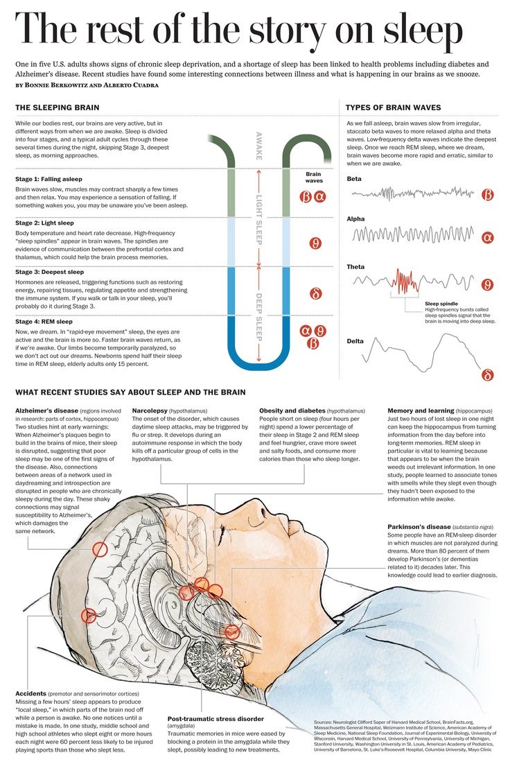 the-science-of-sleep