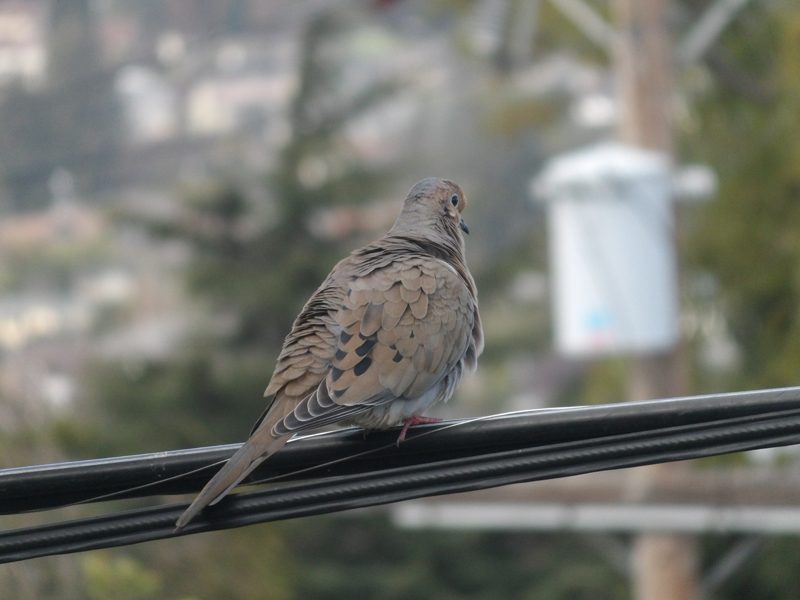 kodak-pixpro-sl25-zoom-bird